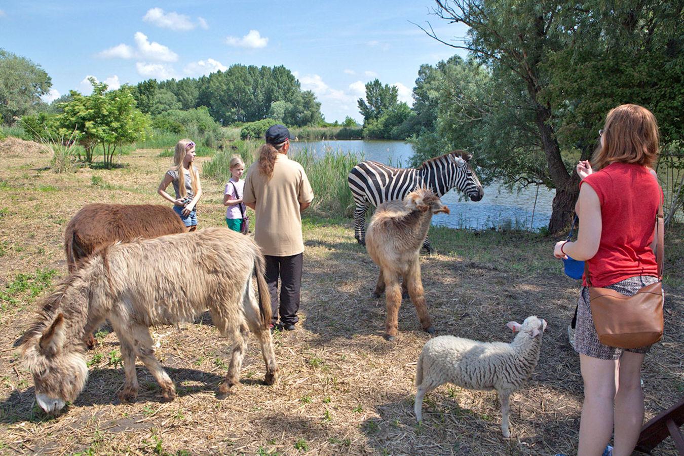 В Словакии появился новый зоопарк — на Кольцевой автодроме Словакии